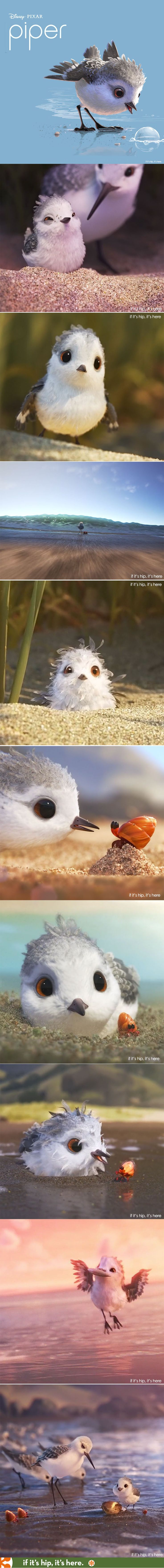 Pixar's Piper is 6 minutes of adorable. See the film in its entirety at the link.