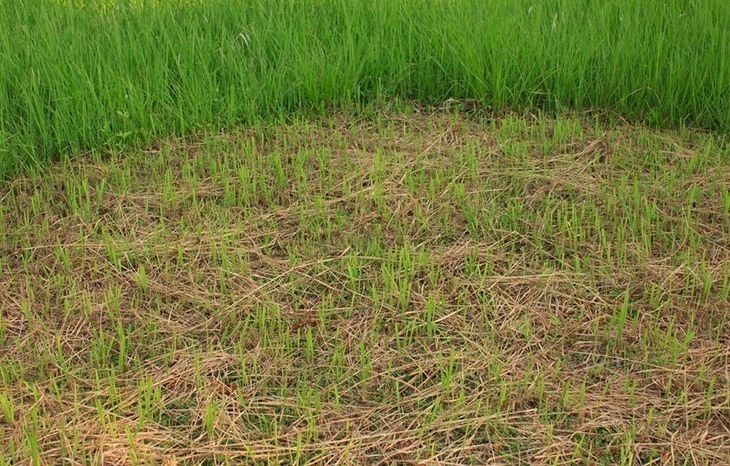 How Long For Grass Seed To Germinate The Surprising Truth Grass Seed Grass Seeds