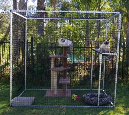 1000 Images About Outdoor Cat Pens On Pinterest