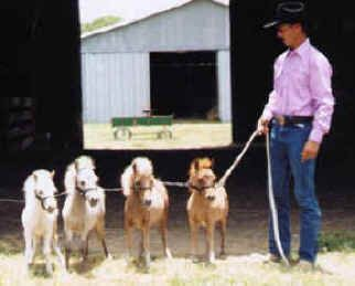 It takes a real man to not only wear pink but to have four mini's on a leash!
