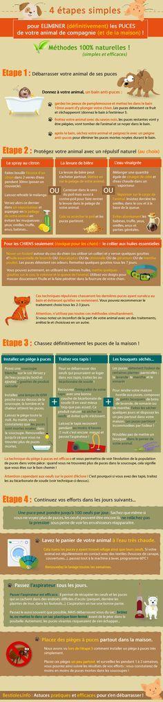 Infographie : 4 étapes SIMPLES pour éliminer les #puces de votre animal (et de la maison !) au naturel.