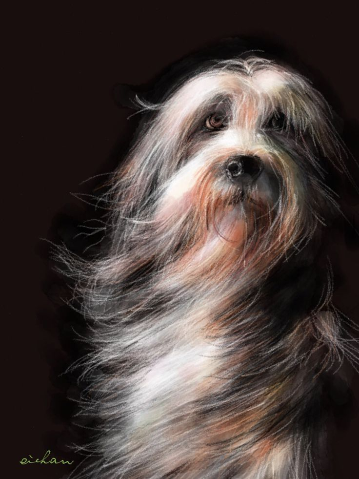 Beautiful drawing of dog by artist Eichan on Paper 53.