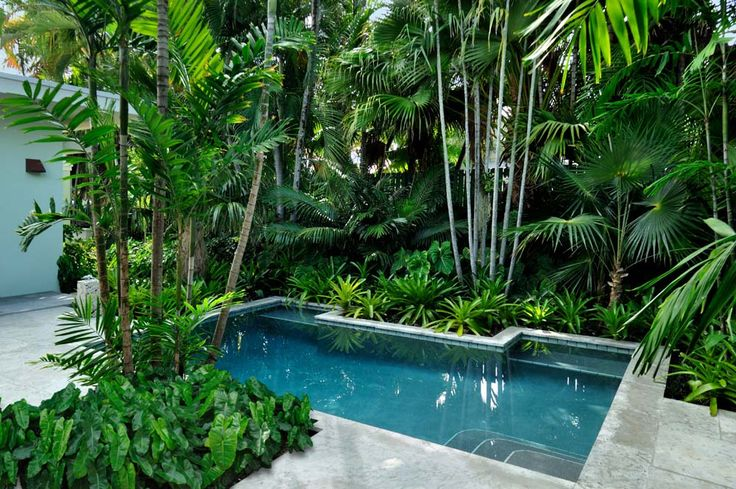 modern architecture - craig reynolds landscape architect - mid-century residence - exterior view - tropical garden