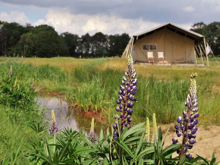 Nederland: Safari lodgetenten » Erfgoed Bossem Noord Limburg