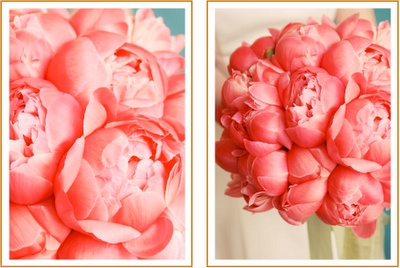 Hot Pink June Rose Peonies for my bouquet (the ones in the picture are coral... obvi)