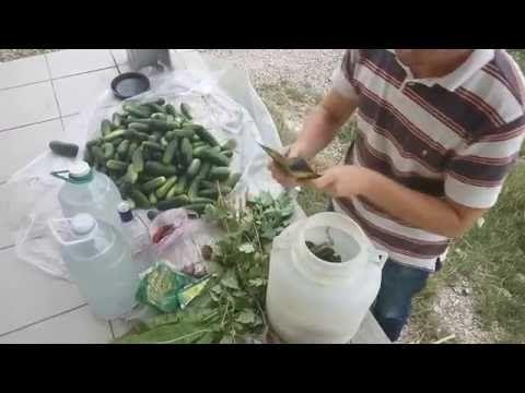 (21) правильная и вкусная засолка бочковых огурцов от А до Я - YouTube