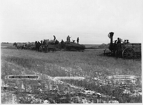 Steam threshing, Portage La Prairie, MB, 1887
