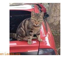Subaru se perdio ℹ  PERDIDO! se llama Subaru y se perdió en San Lorenzo hace una semana  cerca de la rotonda hacia los alisios se fue de casa y no ha vuelto. Macho joven de menos de un año castradomuy manso y confiado si alguien lo ve por favor que contacte conmigo. No tiene el corte en la oreja por que es un gato casero. Contacto Facebook https://www.facebook.com/angel.hernandezdelpino  #Perdido #Encontrado  Contacto y Info: Pulsar la foto o aquí…