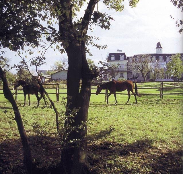 Gaštanové kone