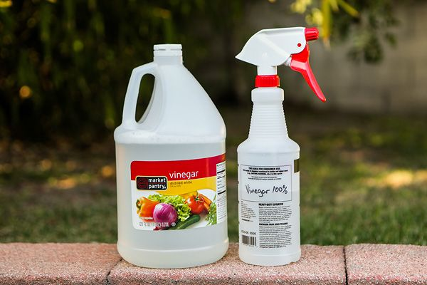 Cleaning Mildew with Vinegar Review – Does it Work? | Green Idea Reviews  kills weed too