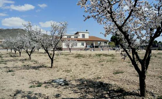 our building integration  as part of the almond trees garden
