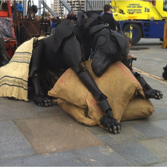 Xolo sleeping, Sea Odyssey Giant Spectacular- Liverpool