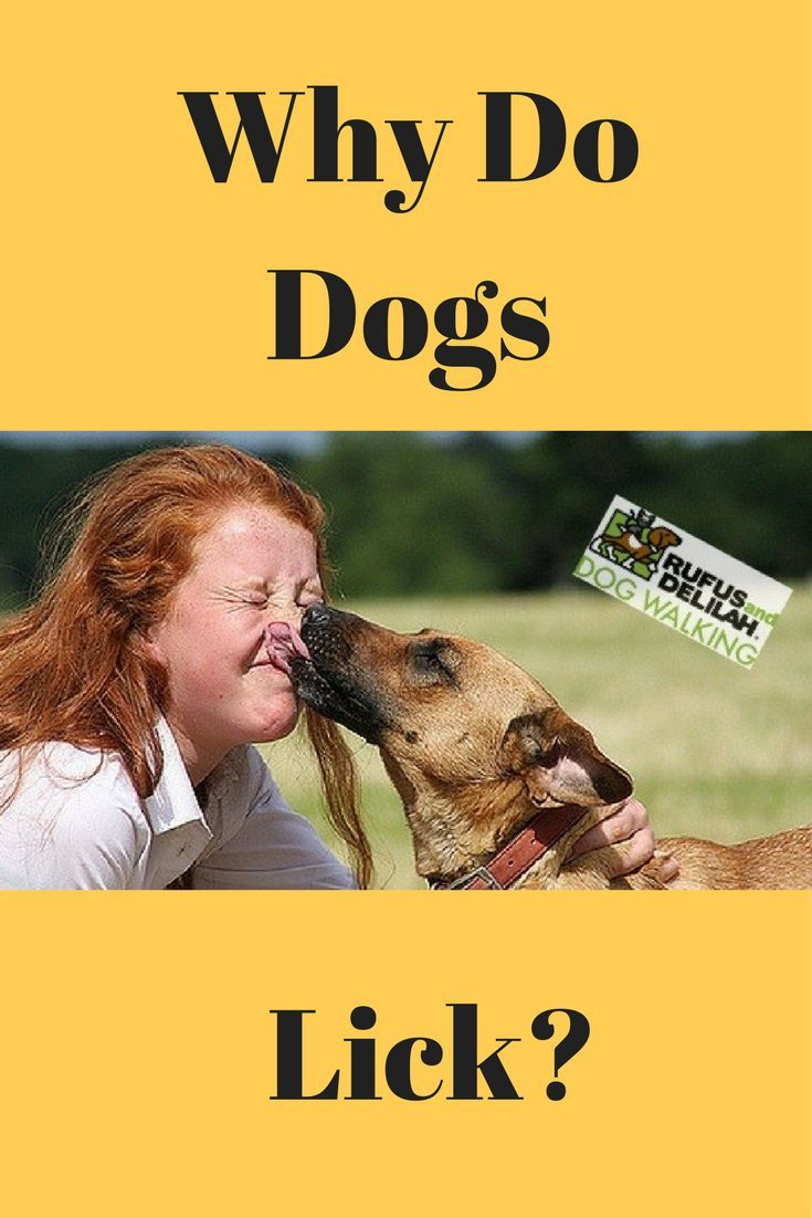 If you have a dog who licks a lot or know a dog who does this have you ever wondered why do dogs lick? Check out our latest article sharing some of the most common reasons on why dogs lick.
