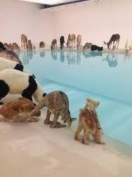 Habitats - (Darwin) Image result for installation art animal