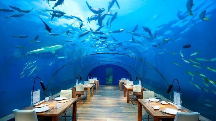 An underwater restaurant, surrounded by a coral reef.