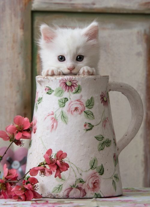 CHAT. Kitten peeking out of jug. Sweet photo!