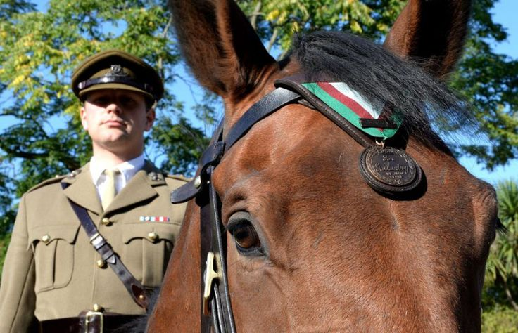 Heroic First World War Horse Awarded Dickin Medal