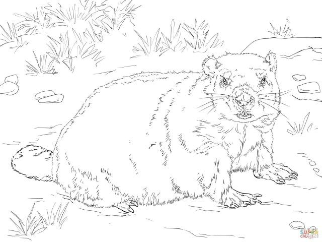 25 Wonderful Image Of Groundhog Coloring Page Entitlementtrap Com Coloring Pages Coloring Pages Inspirational Coloring Pages To Print