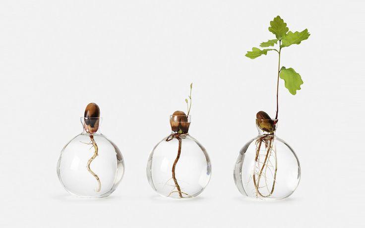 Att gro ekollon i en vas är en snygg inredningsdetalj och hör verkligen hösten till. Men hur gör manför att lyckas få sitt lilla ekollon att växa? Vi har svaret.