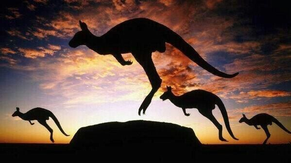 An actual picture. An amazing shot of Kangaroos in the Australian Outback.