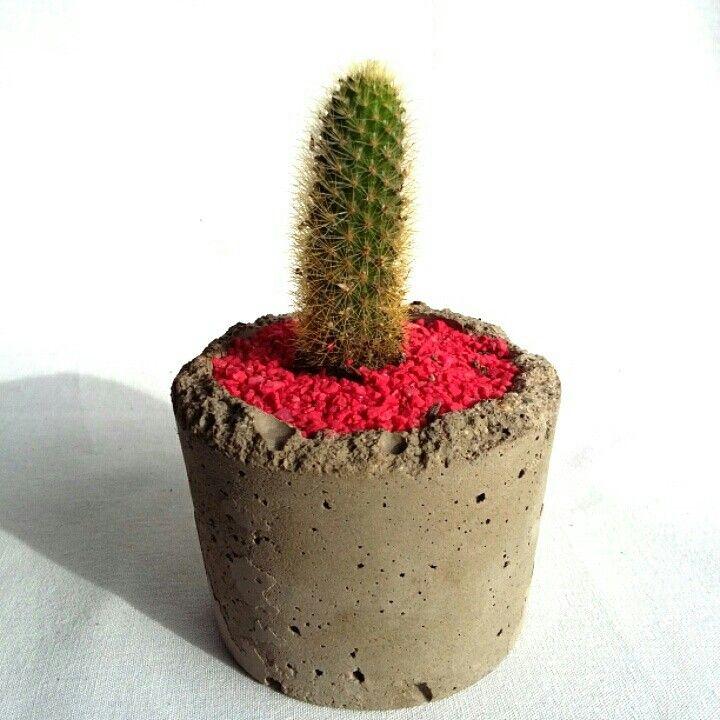Hermoso cactus en maceta de concreto Precio: 8.000 Estamos ubicados en Medellin, Colombia
