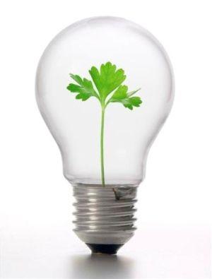 Social Entrepreneurship: Gaining Momentum. The development of the socially responsible entrepreneur