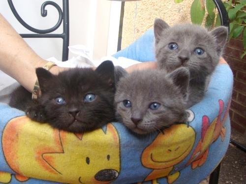 Mascota en adopción en Adoptaloo.com - Gatitos preciosos buscan hogar