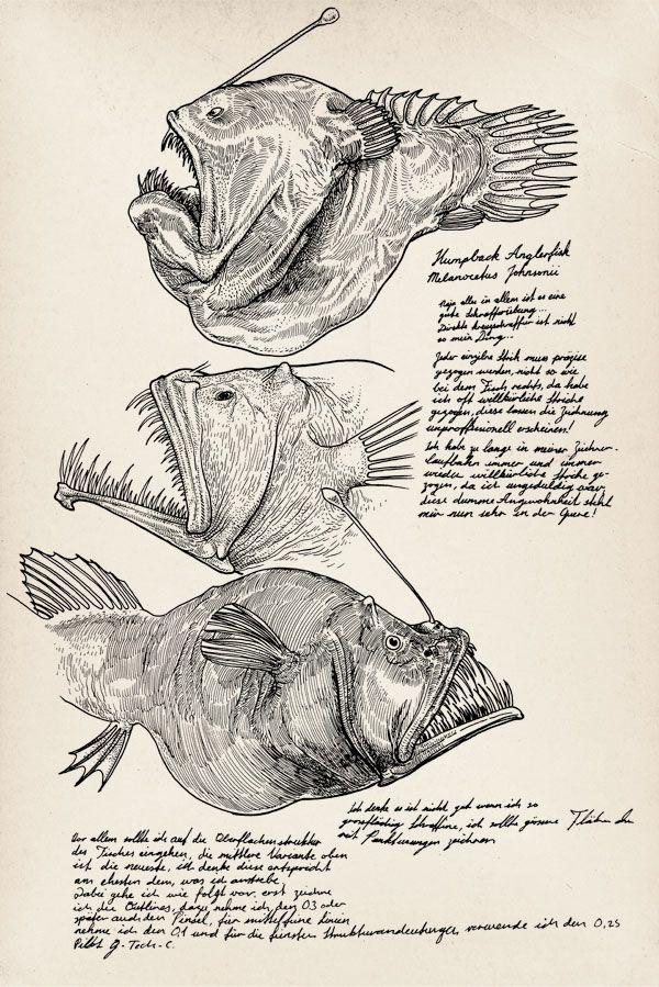 Pez Abisal (Melanocetus johnsonii)
