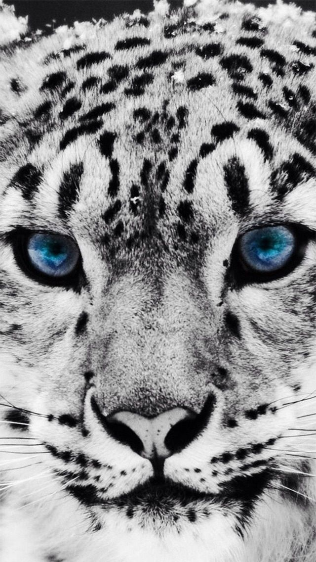 10 best Animal prints images on Pinterest | Animal prints, Leopard ...