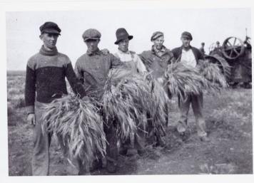 Ukrainian immigrants harvesting: Saskatchewan, 1915