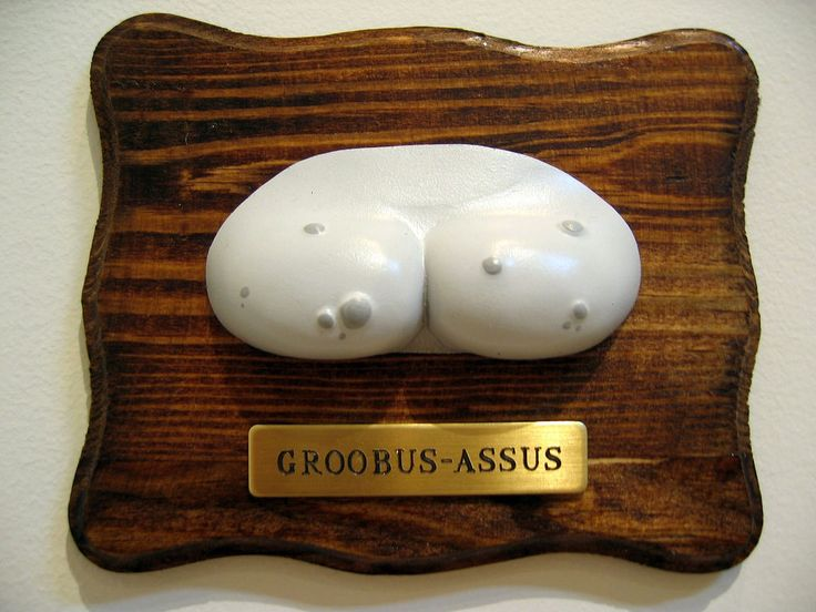 Groobus Asus - by Andrew Bell