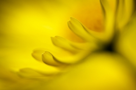 Mad About Yellow by Ursula Abresch