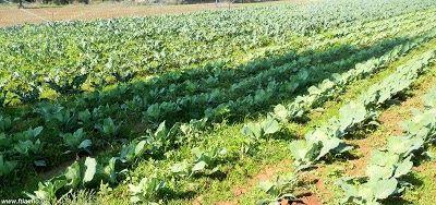 Ημερολόγιο σποράς και φυτέματος λαχανικών και εποχή συγκομιδής τους ανά μήνα - Φτιάχνω μόνος μου