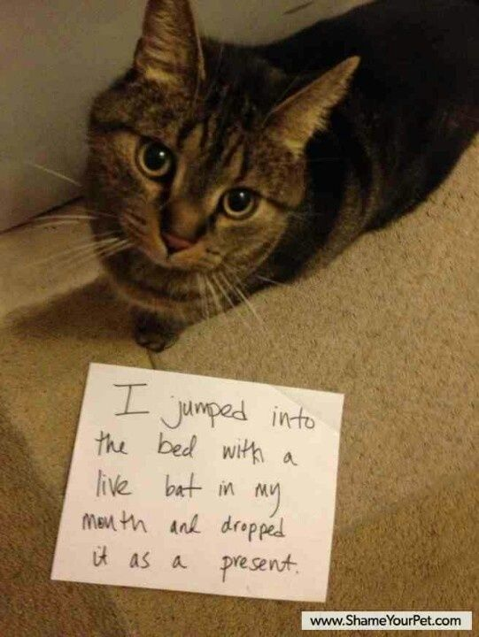 The best of cat shaming - Part 7 - FB TroublemakersFB Troublemakers
