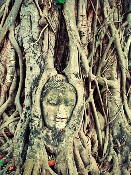 Buddha head, Unseen Thailand