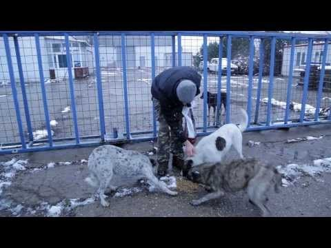 "Stray Dog Rescuers - Romania - 2013 - subtitles - What is the truth behind the ""kill-law"" in Romania.SHARE!!! SHARE!!"