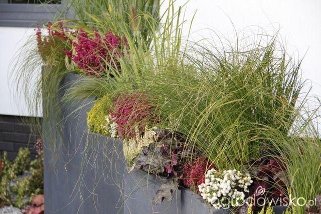 Ogród z lustrem - strona 205 - Forum ogrodnicze - Ogrodowisko