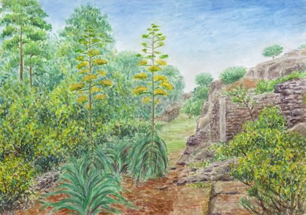 Agave on the outskirts of Pompeii, watercolor and pastel by Jana Haasová