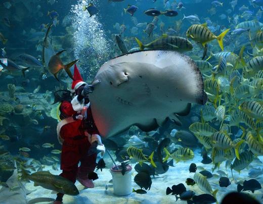 Aquaria KLCC in Kuala Lumpur - Kuala Lumpur Aquarium
