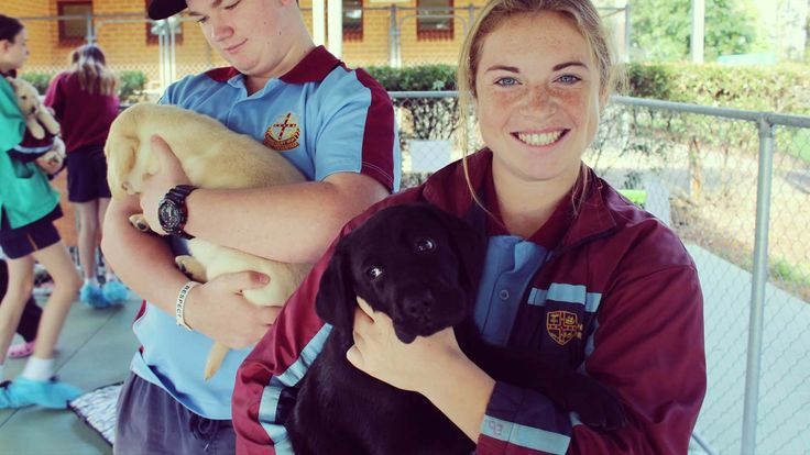 Get ready for some cute puppies! Students in New South Wales are taking part in what could be one of the best school activities ever. Their job is to teach Labrador puppies some important skills before they go off for Guide Dog training.