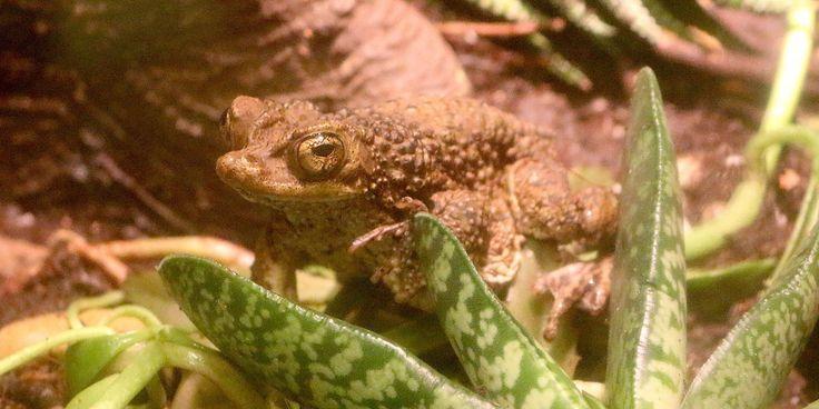 Detroit Zoo sending 5,600 tadpoles to permanent vacation in Puerto Rico #U_S_A_ #iNewsPhoto