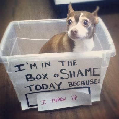 How big do they make these?: Animals, Dog Shaming, Funny Dogs, Boxes, Funny Stuff, Puppy, Funny Animal