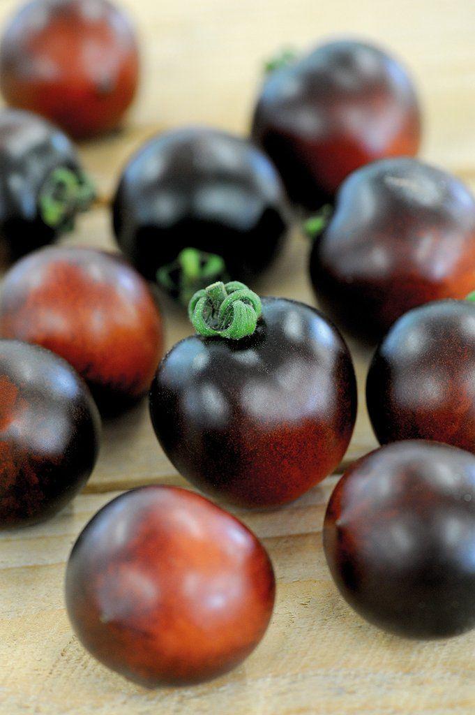 TOMAT 'Indigo Cherry Drops'