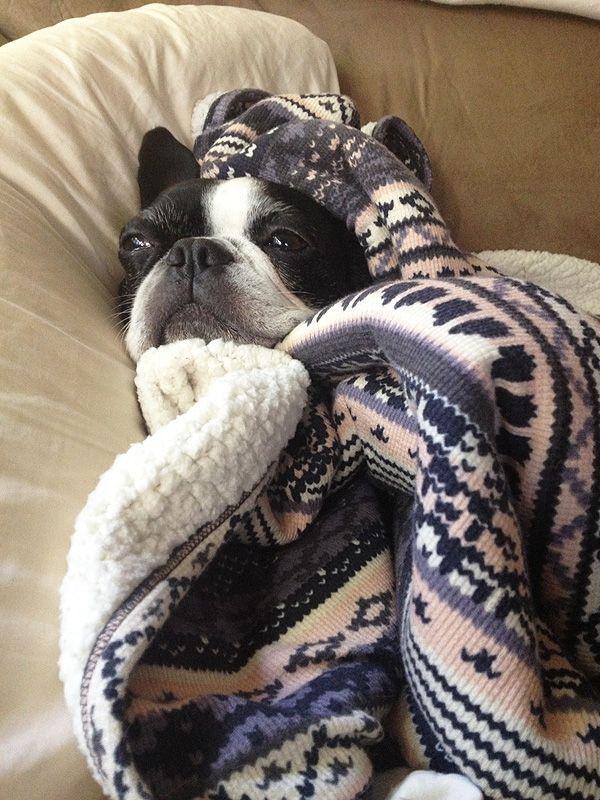 Cozy in a Splendid thermal blanket! #splendideveryday