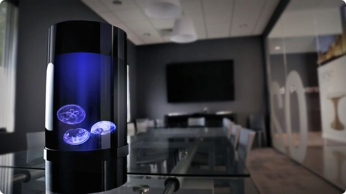Jellyfish Cylinder Nano aquarium, the easiest and most affordable aquarium that makes keeping jellyfish simple for anyone.
