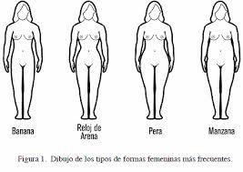 Las proporciones y medidas del busto, cintura y caderas han sido utilizadas para definir las formas básicas del cuerpo femenino
