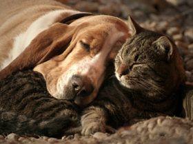cat pillow-dog blanket - stock photo