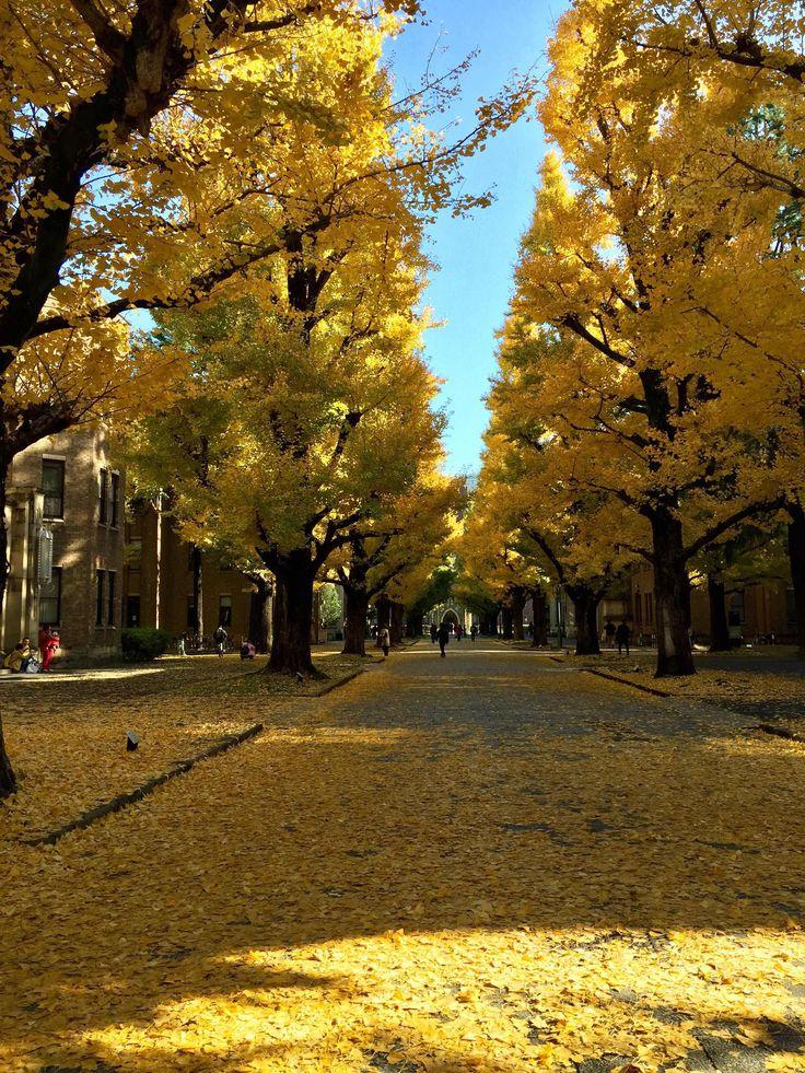 Когда люди побегут из городов в деревни (с): japan_walks(BETA)