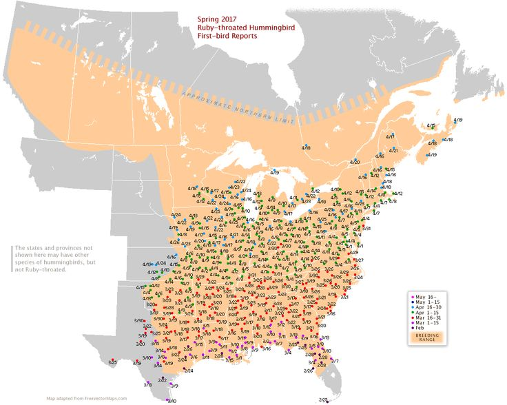 Rubythroated map for North America Ruby throated