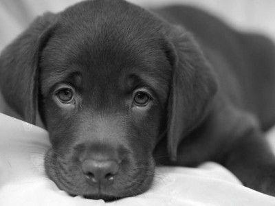 fondos de pantalla de perritos postear